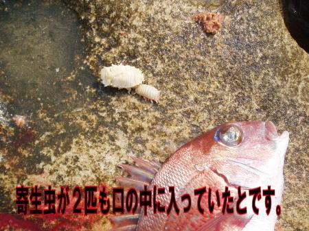 ガニ瀬04