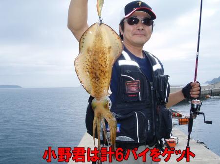黒島イカ02