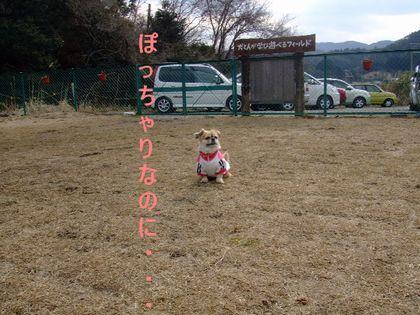 2008_03060067.jpg