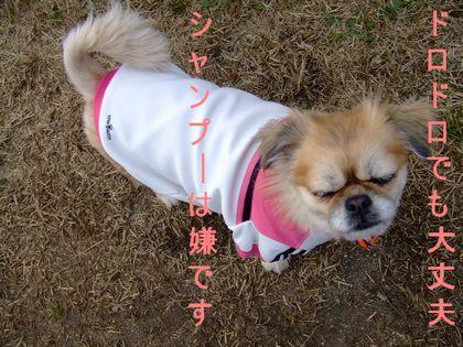 2008_03060072.jpg