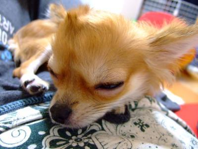 ほぼ寝てはっちー。