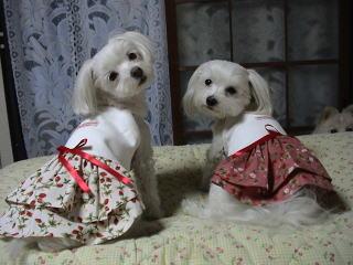 ジジちゃん&ジュリちゃん