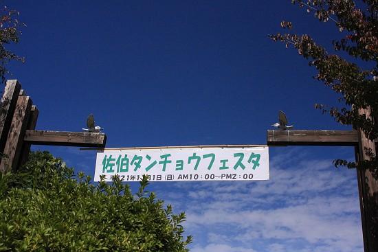 丹頂まつり1151-s