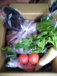 鯛炭農園の野菜たち