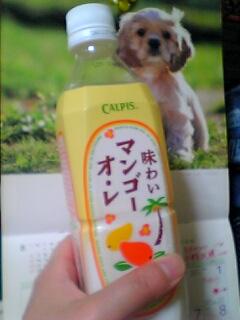 味わいマンゴーオ・レ