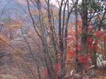 向かって左側は もう冬支度 右側は 秋満開 不思議な写真♪