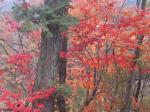 秋の夕日に~♪
