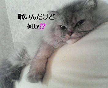 眠いラック