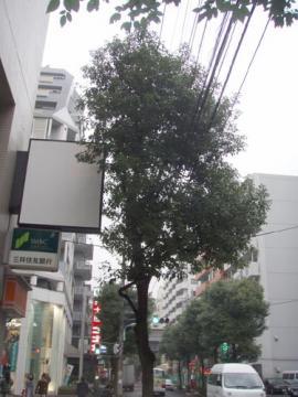 NO10_11_008.jpg