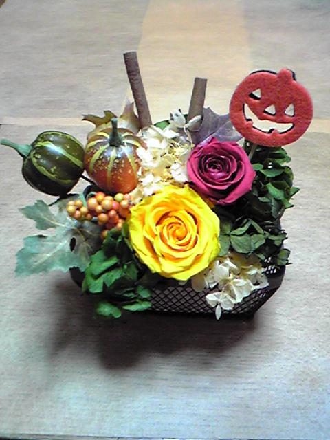 seeds 10月 花見本