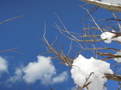 梅の木と雪と雲