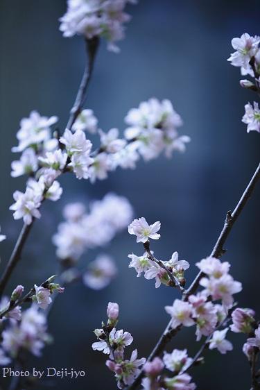 brog桜24