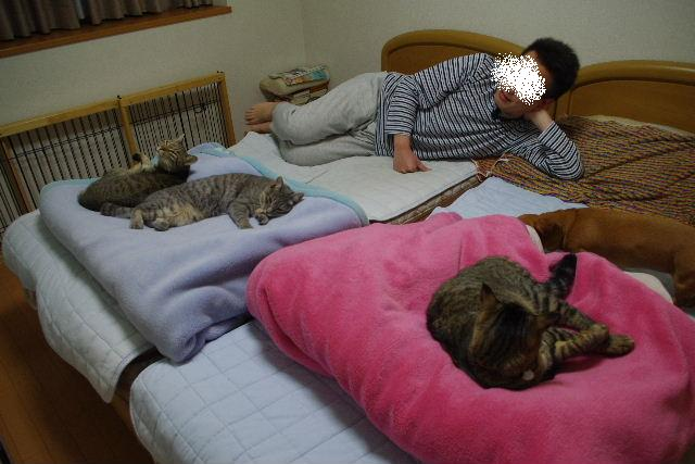 2011_0502hime0030.jpg