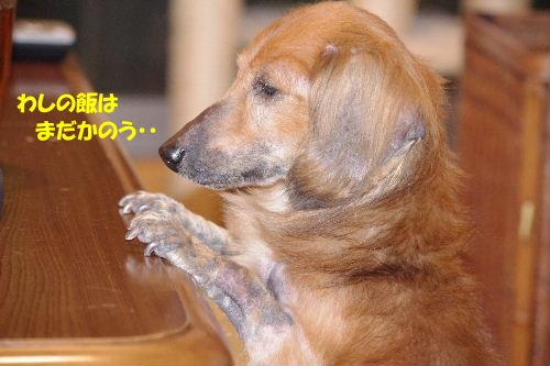 2011_0514hime0013.jpg