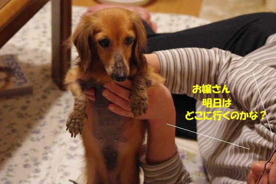 2011_0514hime0030.jpg