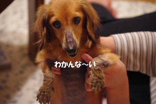 2011_0514hime0031.jpg
