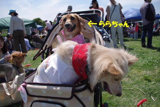 2011_0515hime0013.jpg