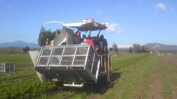 フードプラン収穫開始