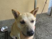 譲渡対象犬2011.9.19