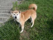 迷い犬2011.9.10