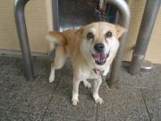 譲渡対象犬2011.9.18