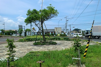 夏の和田駅の風景CIMG1608