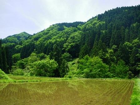 ツキノワグマの棲む森