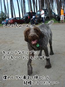 モテモテクロエちゃん1