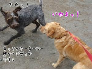 モテモテクロエちゃん2
