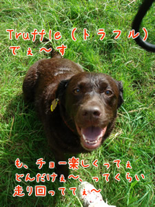 Truffleちゃん