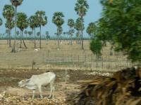 カンボジア53