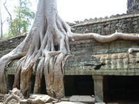 カンボジア84