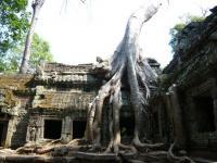 カンボジア85