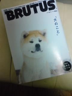 brutus080308_1900~02