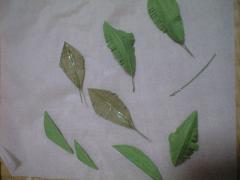 ヤシの木3