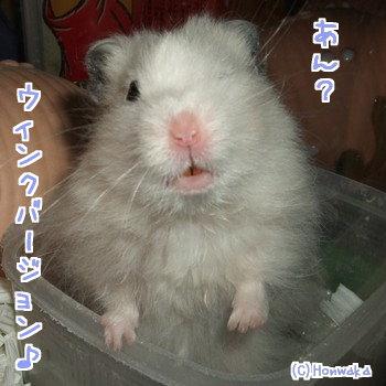 うぃ~んく♪