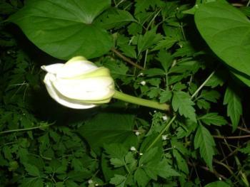 2006_0809(001).jpg