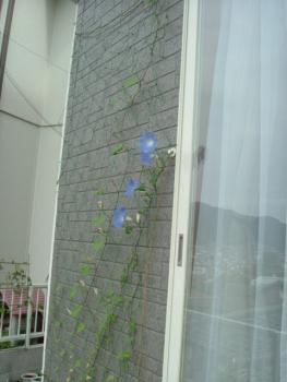 2006_1012(008).jpg