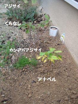 2006_1129(009).jpg