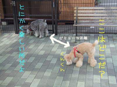 dogrun-004-01.jpg