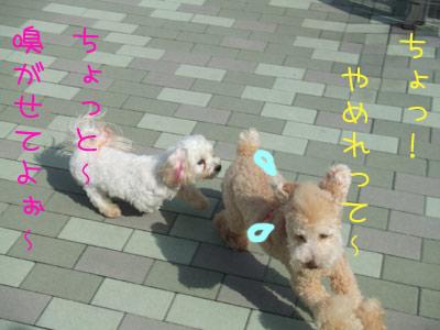dogrun-010-03.jpg