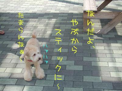 dogrun-022-04.jpg