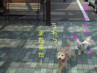 dogrun-042-05.jpg