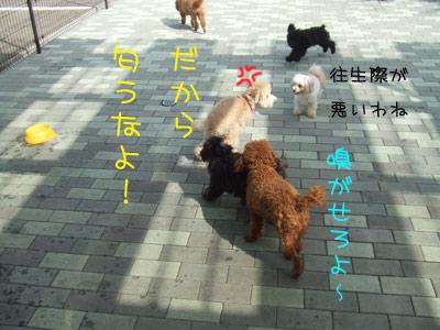 dogrun-086-13.jpg