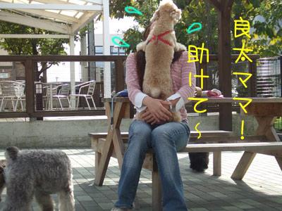 dogrun-099-14.jpg