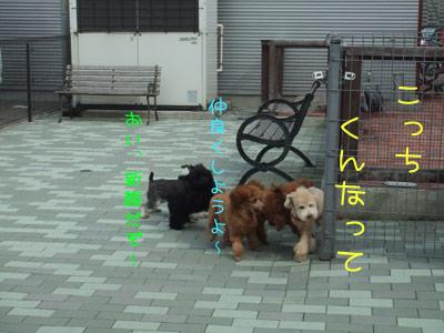 dogrun-122-11.jpg