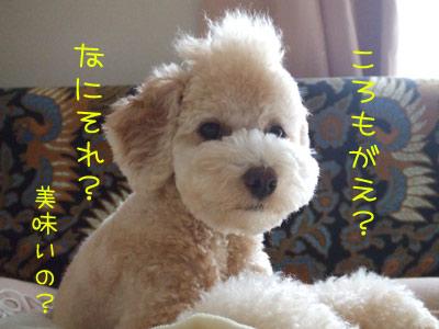 koromogae-071-13.jpg