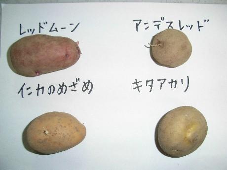 jyagaimo1.jpg