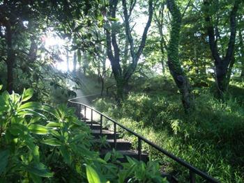 公園の天使の梯子