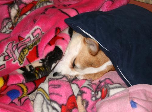 毛布の中ですやすやリッチ